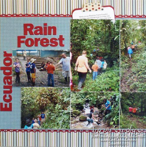Rain Forest 1