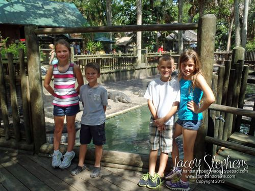 Alligator Farm a